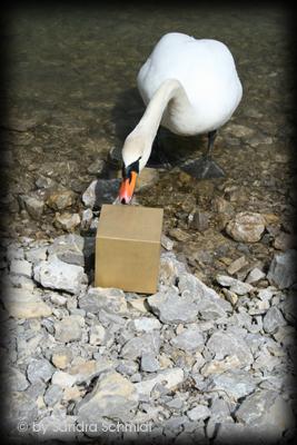 hintergrund_swan